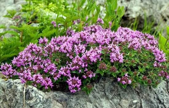 Травы при остеохондрозе шеи, для суставов и позвоночника