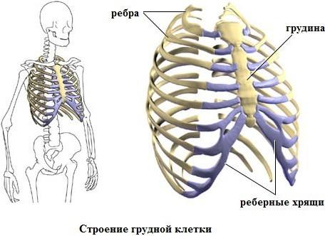 Межреберный остеохондроз (хондроз) - симптомы и лечение