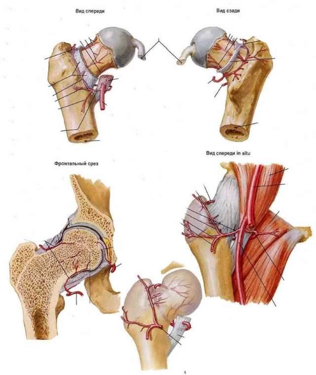 Боль в тазобедренном суставе - причины, симптомы и лечение
