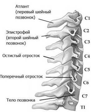 Шейный остеохондроз - причины, симптомы и лечение