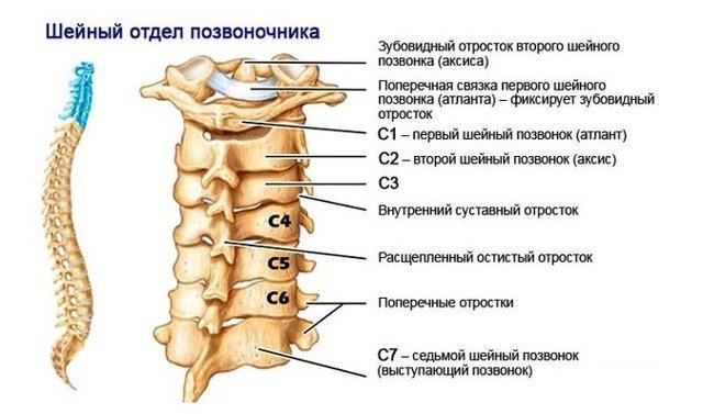Мазь при остеохондрозе шейного отдела позвоночника - виды