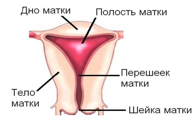 Рак шейки матки: причины и симптомы, особенности лечения, стадии, диагностика