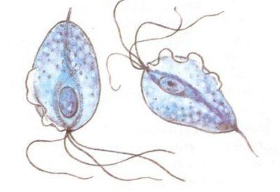 Боли и рези в мочеиспускательном канале у мужчин и женщин: симптомы, лечение