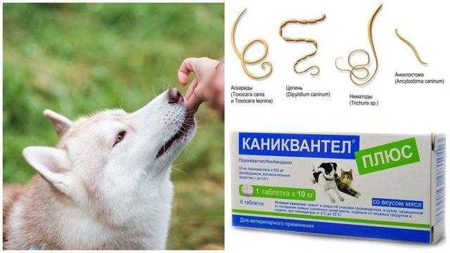 Каниквантел Плюс для собак: инструкция по применению, цены и отзывы