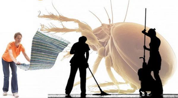 Аллергия на пыль — симптомы, как проявляется, что делать