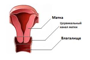 БАК посев из цервикального канала при беременности: что это такое, как сдавать, расшифровка