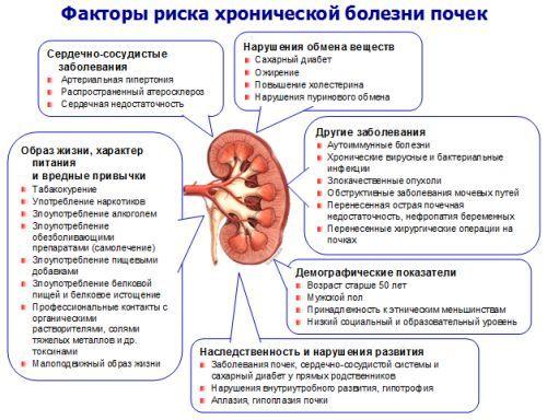 Болезни почек: симптомы, лечение и профилактика