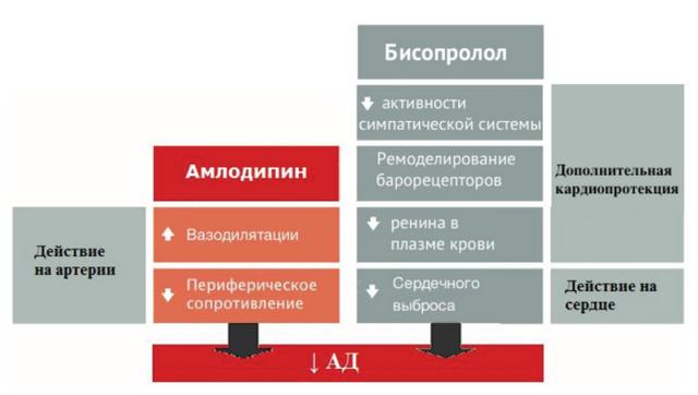 АМЛОДИПИН и БИСОПРОЛОЛ - можно ли принимать одновременно (совместимость)