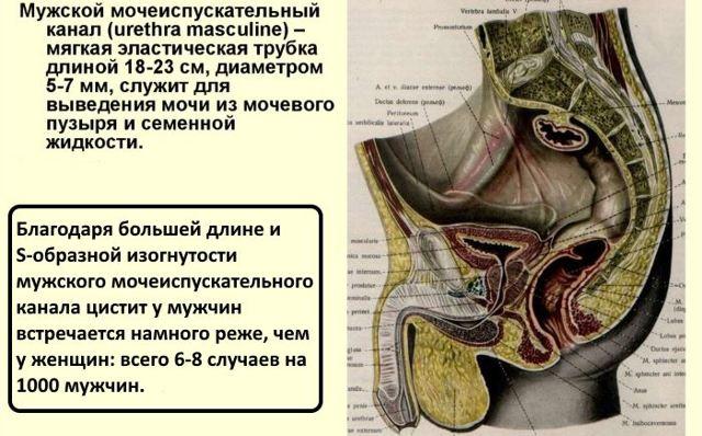 Воспаление мочевого пузыря у женщин и мужчин: причины, симптомы, лечение