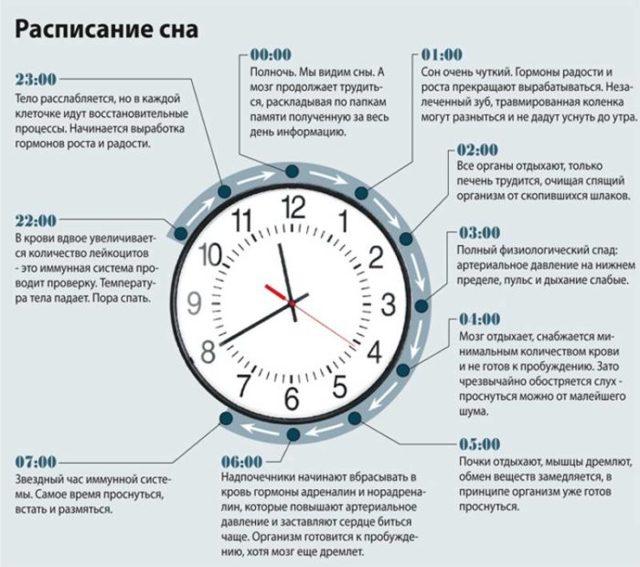 Сколько нужно спать взрослому человеку и ребенку