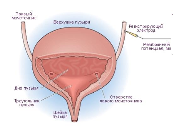 Опухоль мочевого пузыря у мужчин лечение народными средствами