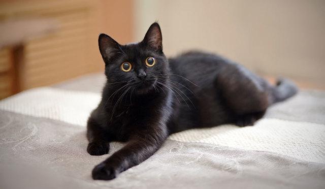 Глисты у кошек: передаются ли человеку, можно ли заразиться