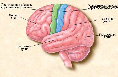 Эпилепсия у детей: симптомы и лечение. Как выглядит приступ. Причины эпилепсии у детей