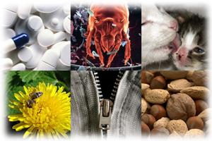 Аллергический ринит - лечение