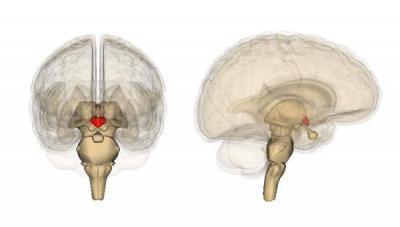 Симптомы нарушения функций гипофиза: как проверить недостаток гормона?