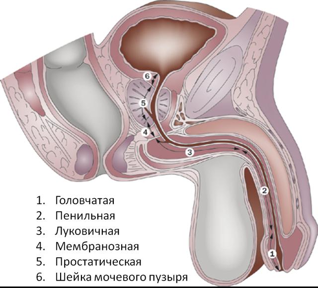 Половая функция простатит можно ли делать прогревание простатита