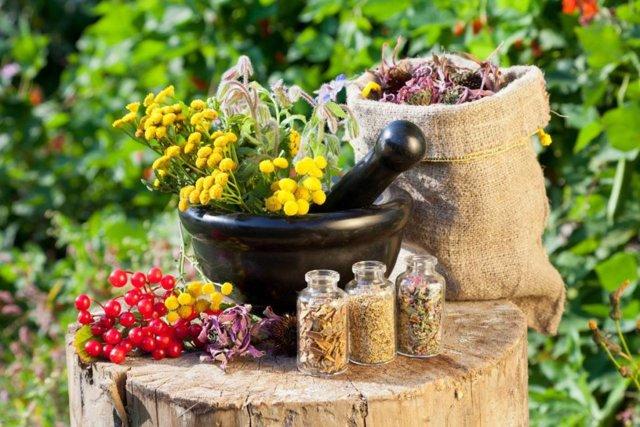 Лечение простатита травами: самые эффективные рецепты, травяные сборы