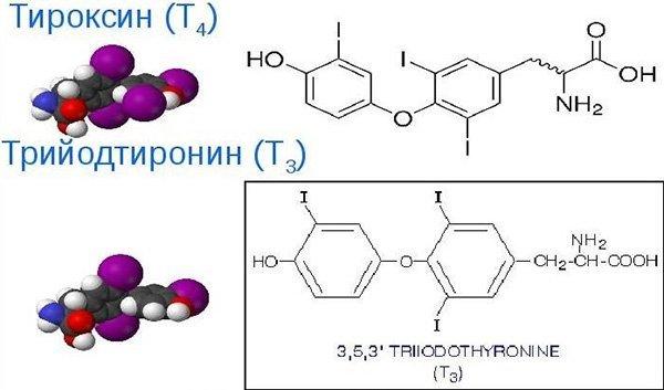 Анализ на свободный Тироксин (Т4): что это такое, норма