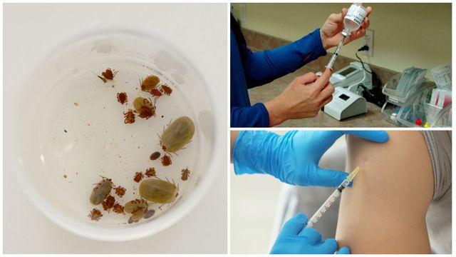 Где можно сделать прививку против энцефалита, куда ее делают?