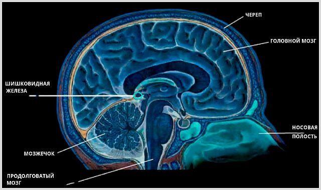 Киста шишковидной железы головного мозга: что это такое, лечение народными средствами