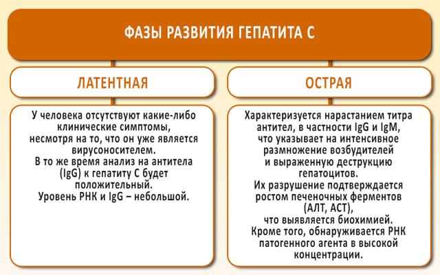 Антитела к гепатиту С: виды и период обнаружения