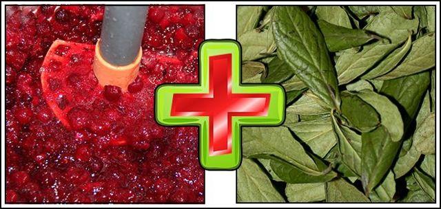 Листья брусники при цистите: как принимать, как приготовить, противопоказания, побочные эффекты