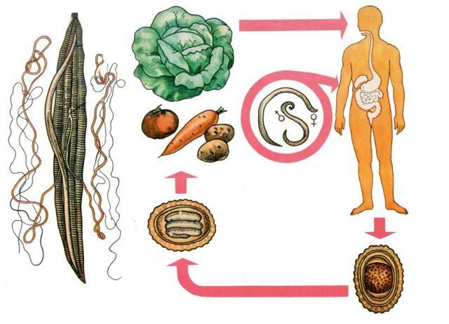 Температура при глистах у детей: могут ли паразиты вызывать температуру